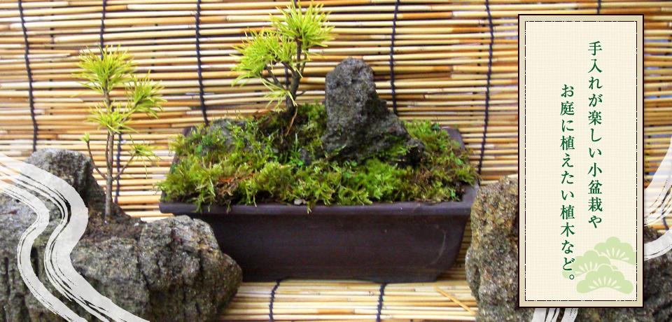 手入れが楽しい小盆栽や お庭に植えたい植木など。